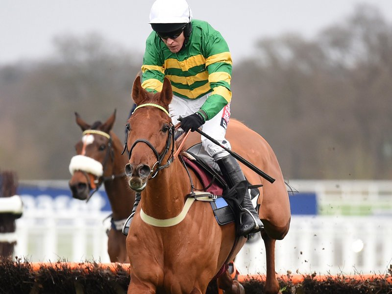 champion hurdle tips