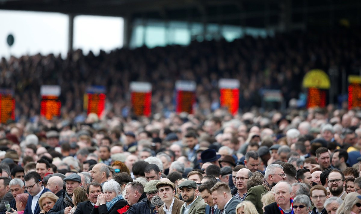 cheltenham showcase tips
